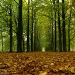 [:nl]Beukenbos[:en]Beech forest
