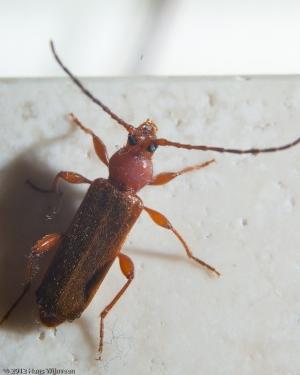 macro-bug-1